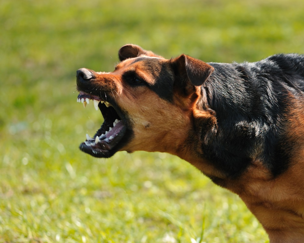 http://www.ernstlawgroup.com/wp-content/uploads/2016/03/Angry-dog-baring-teeth.jpg