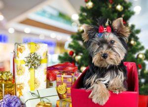 yorkshire terrier on christmas