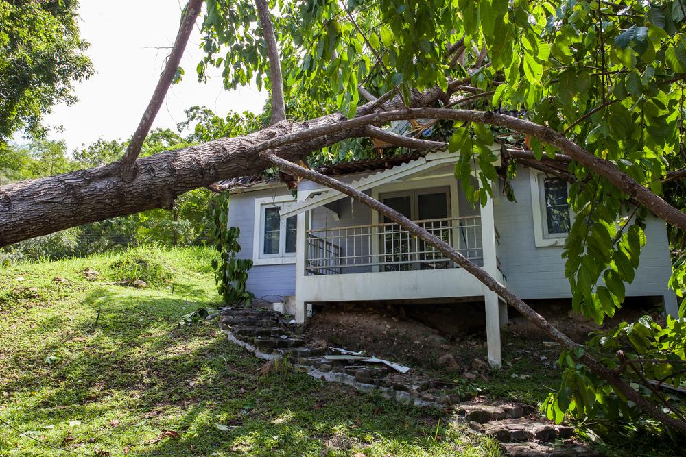 tree that has fallen onto house