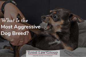 What Is The Most Aggressive Dog Breed